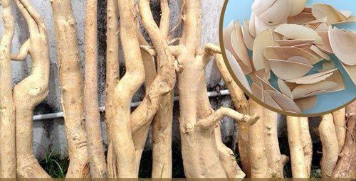 Натуральный корень эврикомы длиннолистной