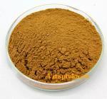 Красный камфорный гриб Антродия: «рубин» из Тайвани