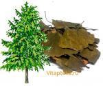 Гинкго билоба — листья